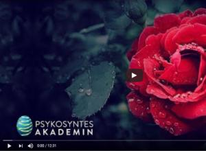 Bild på video till rosen