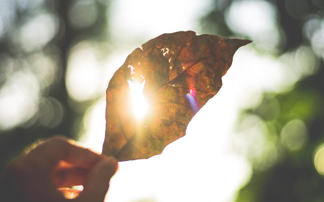 Ljus som skiner genom ett löv